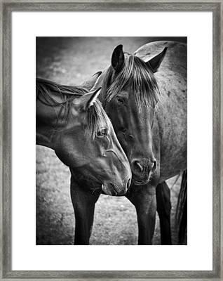 Eskimo Kisses Framed Print by Maggie Terlecki