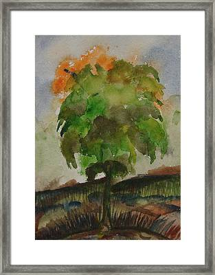 Esoteric Tree Framed Print by Aim to be Aimless