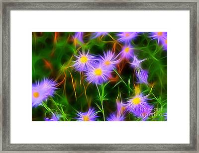Essence Of Asters Framed Print