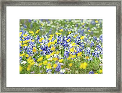 Essence Of Colors Framed Print