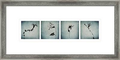 Essence Of Flowers Framed Print by Maggie Terlecki