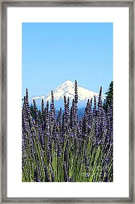 Essence Of Lavender Framed Print