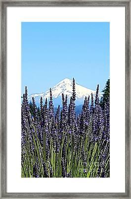 Essence Of Lavender Framed Print