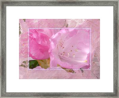 Essence Of Pink Framed Print by Lori Seaman