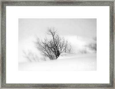 Framed Print featuring the photograph Essence Of Winter by Elfriede Fulda
