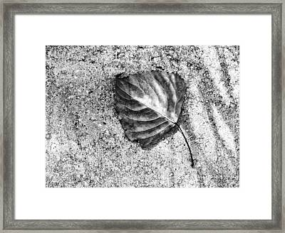 Essential ...black And White Framed Print