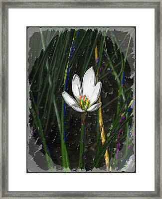 Estuary Elegance Framed Print by Tim Allen