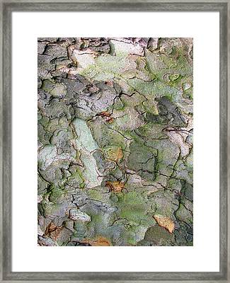 Etched In Bark Framed Print by Jessica Jenney