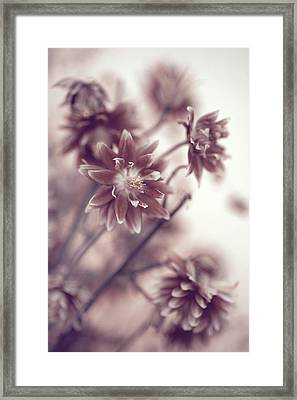 Framed Print featuring the photograph Eternal Flower Dreams  by Jenny Rainbow