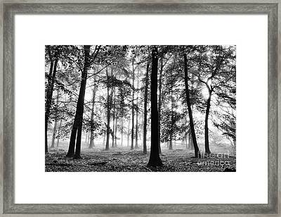Ethereal Beech Wood Framed Print by Tim Gainey