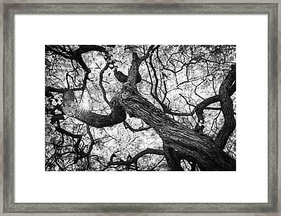 Ethereal Maple Framed Print