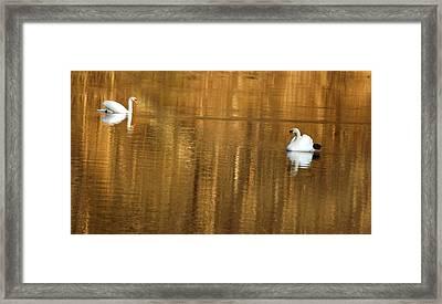 Ethereal Peace Framed Print by Elsa Marie Santoro