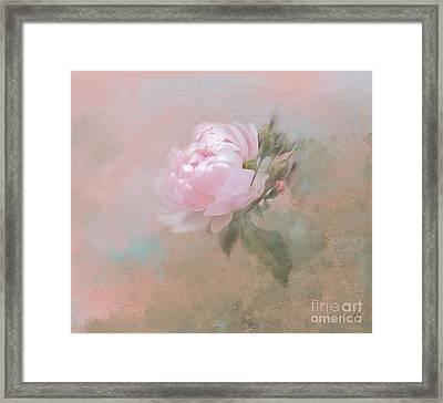 Ethereal Rose Framed Print