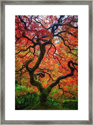 Ethereal Tree Alive Framed Print by Darren White
