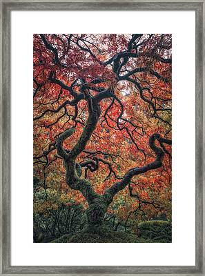 Ethereal Tree Framed Print by Darren White