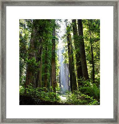 Ethereal Tree Framed Print
