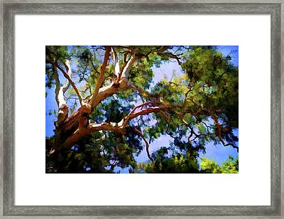 Framed Print featuring the digital art Eucalypt by Margaret Hormann Bfa