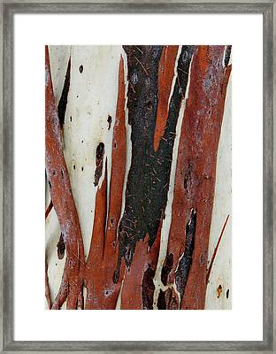 Eucalyptus Bark Abstract 2 Framed Print