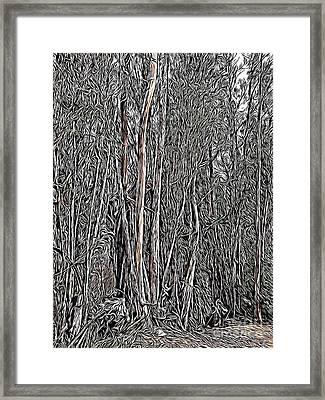 Eucalyptus  Framed Print