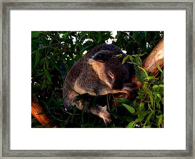 Eucalyptus Daze Framed Print by Douglas Kriezel