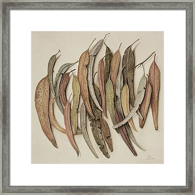 Eucalyptus Leaves Framed Print