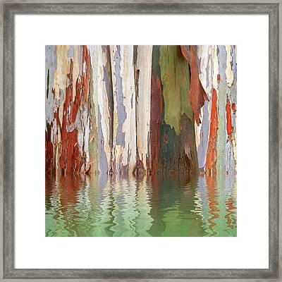 Eucalyptus Tree Bark Reflections Framed Print by Gill Billington