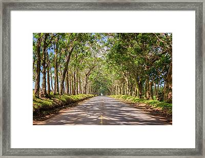 Eucalyptus Tree Tunnel - Kauai Hawaii Framed Print by Brian Harig