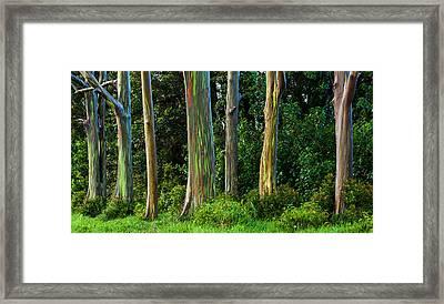 Eucalyptus Trees Framed Print by Thorsten Scheuermann