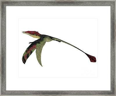 Eudimorphodon Wings Down Framed Print by Corey Ford