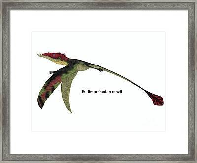 Eudimorphodon Wings Down With Font Framed Print by Corey Ford