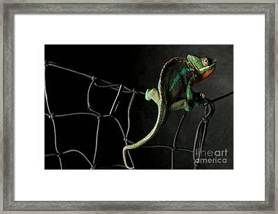 Eugene Framed Print by Darcy Evans