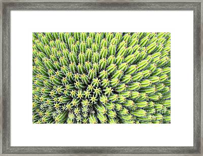 Euphorbia Framed Print by Delphimages Photo Creations