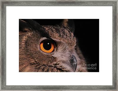 Eurasian Eagle-owl #3 Framed Print