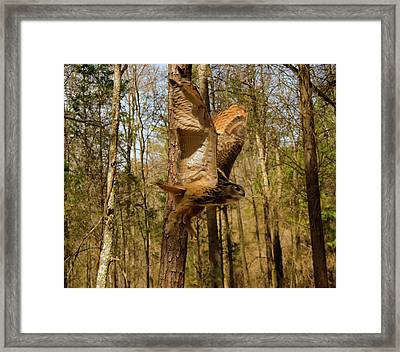 Eurasian Eagle Owl In Flight Framed Print