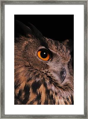 Eurasian Eagle-owl Framed Print