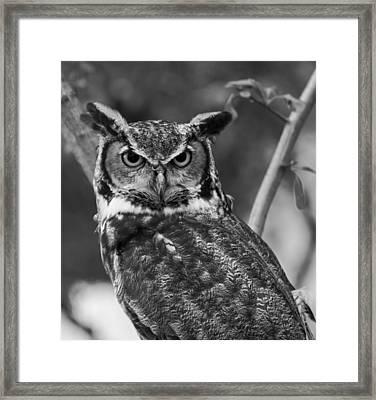 Eurasian Eagle Owl Monochrome Framed Print
