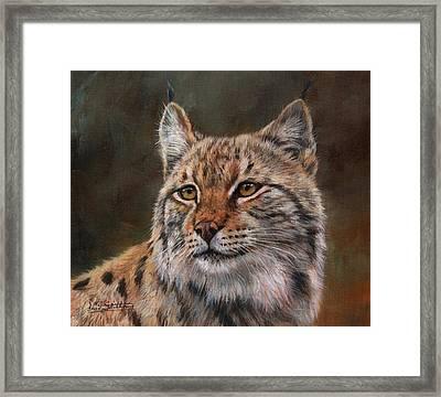 Eurasian Lynx Framed Print by David Stribbling