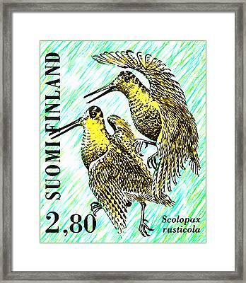 Eurasian Woodcock  Framed Print by Lanjee Chee