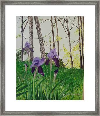 Eureka Springs Irises Framed Print by Sharon  De Vore