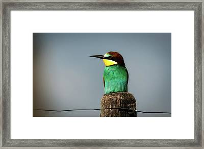 Framed Print featuring the photograph European Bee Eater by Wolfgang Vogt