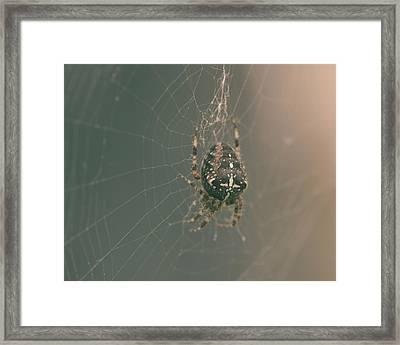 European Garden Spider B Framed Print
