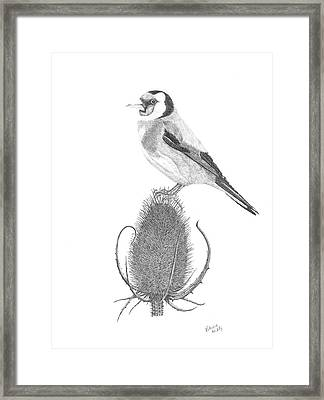 European Goldfinch Framed Print