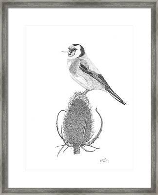 European Goldfinch Framed Print by Patricia Hiltz