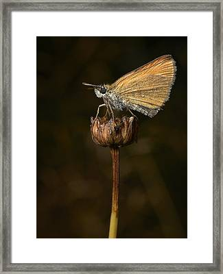 Framed Print featuring the photograph European Skipper by Jouko Lehto