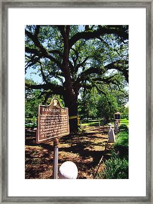 Evangeline Oak St Martinville Louisiana Framed Print by Thomas R Fletcher