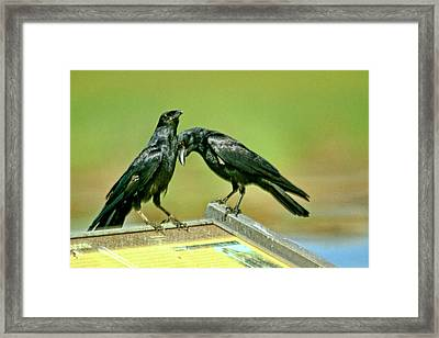 Even Crows Need Some Lovin Framed Print