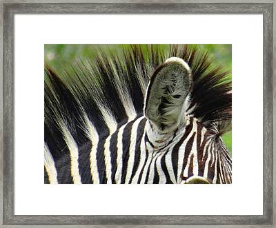 Even My Ears Are Striped Framed Print