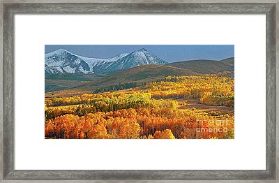 Evening Aspen Framed Print