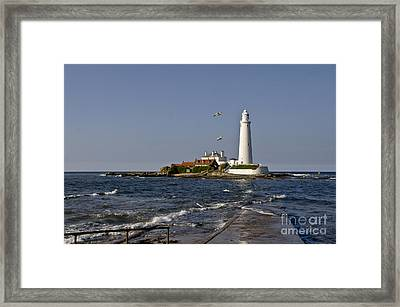 Evening At St. Mary's Lighthouse Framed Print