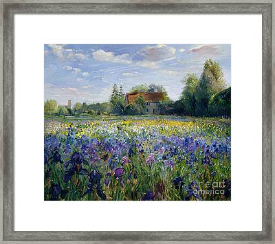 Evening At The Iris Field Framed Print by Timothy Easton